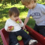 Picking, Plucking and Pulling