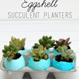Ombre Dyed Eggshell Succulent Planters
