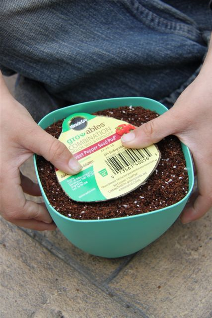 MiracleGro Gro-ables // SmashedPeasandCarrots.com